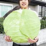 大きさ3倍!「巨大キャベツ」の栽培法を確立