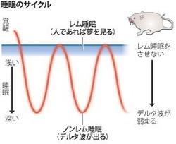 レム睡眠が記憶形成を促進
