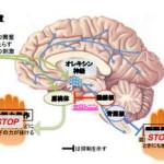 気持ちの高ぶりで全身の力が抜ける「情動脱力発作」を防ぐ神経経路を解明