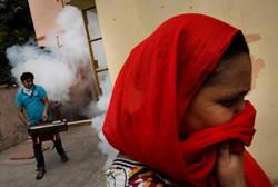 インドでデング熱拡大