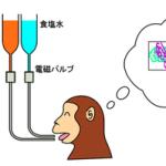 カテゴリー化して情報整理する脳の神経活動を解明