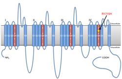 脊髄小脳変性症の原因遺伝子