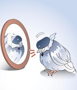 ハト:「鏡の中の自分」認識…慶大チーム 議論に区切り